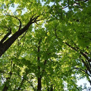 nature et respiration