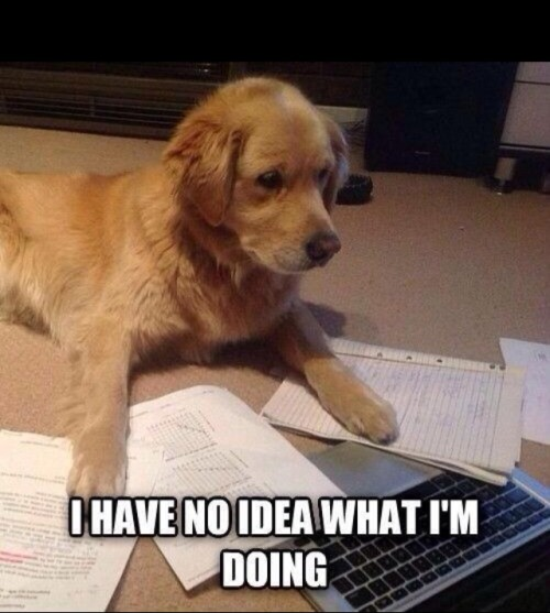Image result for dog studying