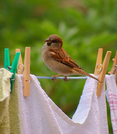 sweetruffles:</p> <p>I need to dry off.<br /> Should I hang out here<br /> with the clothes?<br />