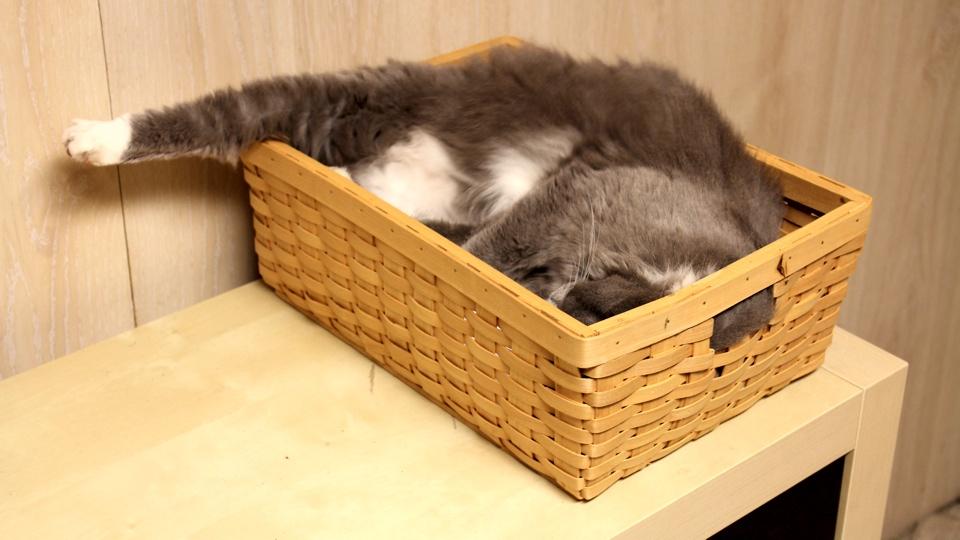 Gouda in a Box