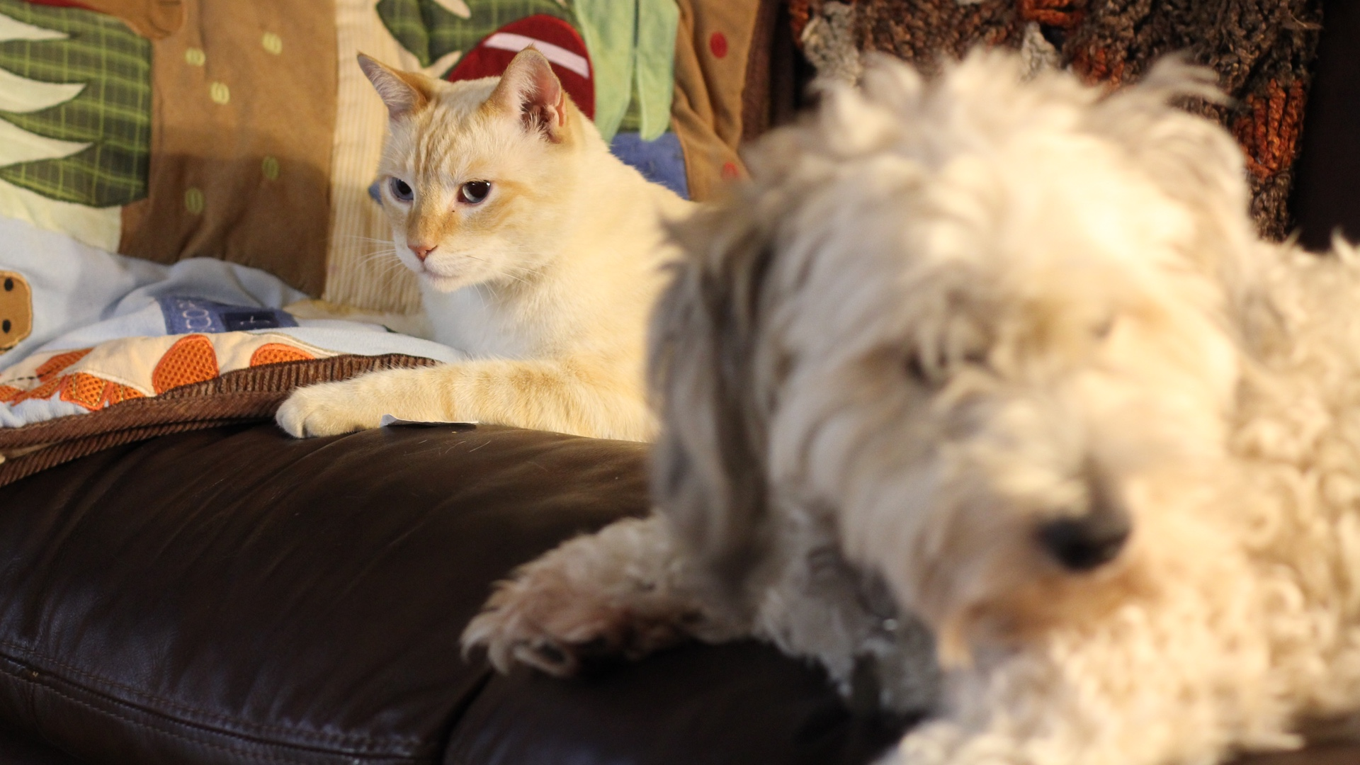 Ko'a and Lola