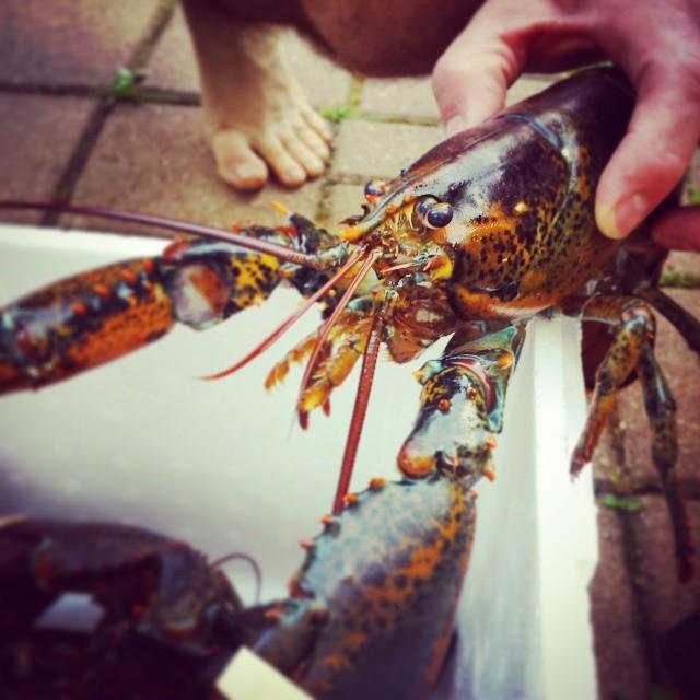 Maritine lobsters!