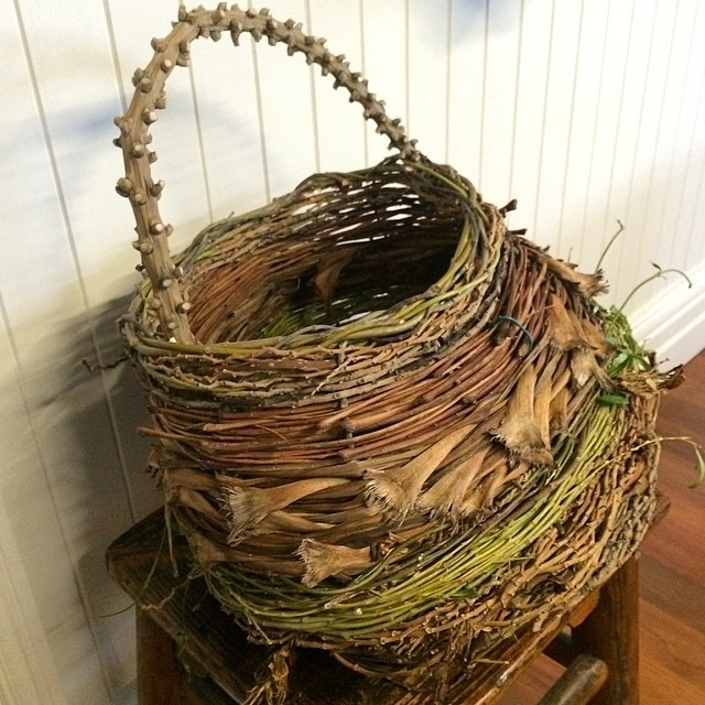 autumn harvest #chokosistergallery 28/2014#weepingwillow used fresh (green fibre). Fibres in order of appearance - from centre base are - #hardenbergia #redcordyline #dietes #bangalowinflorescence #philodendron #willow red cordyline #jacaranda #inflorescence before willow rim. Various corded fibres throughout including dried #clivia flower heads and stems. #basketweaving #naturalfibres all from Sydney's #innerwest #urbanjungle