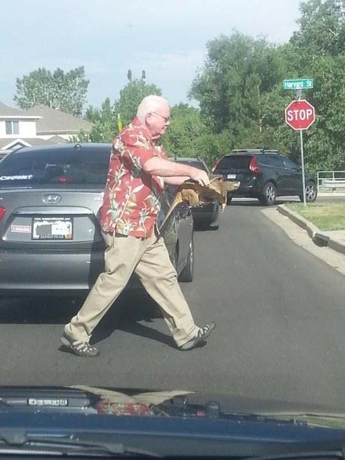 Un uomo ferma l'auto e aiuta una tartaruga ad attraversare la strada!  La mia fiducia nell'umanità è stata ripristinata, almeno in parte. E la vostra?