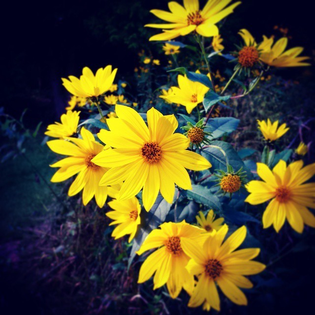 hiking - wildflowers
