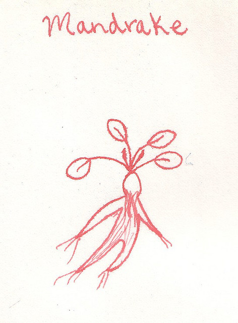 Mandrake drawing in Dragons blood ink, by Sara Star