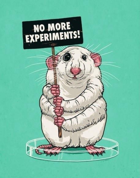 Image result for lab animal meme