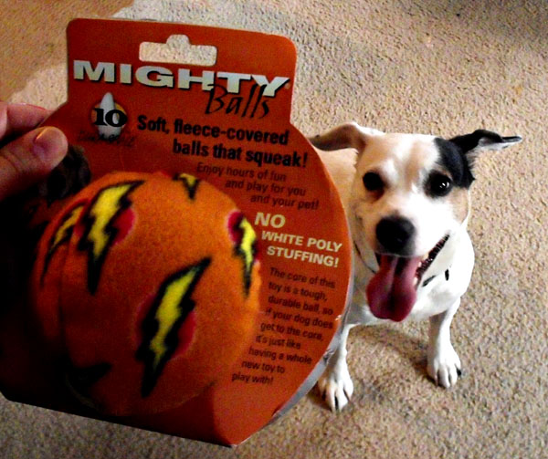 tough dog toys