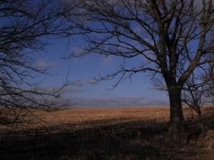 Country Scenery in Nebraska