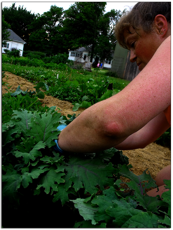 Weeding the Vegetable Garden