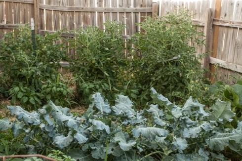 First Year Vegetable Garden