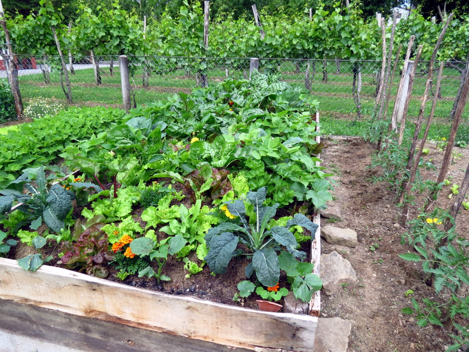 Companion Planting Helps Garden Vegetables Grow
