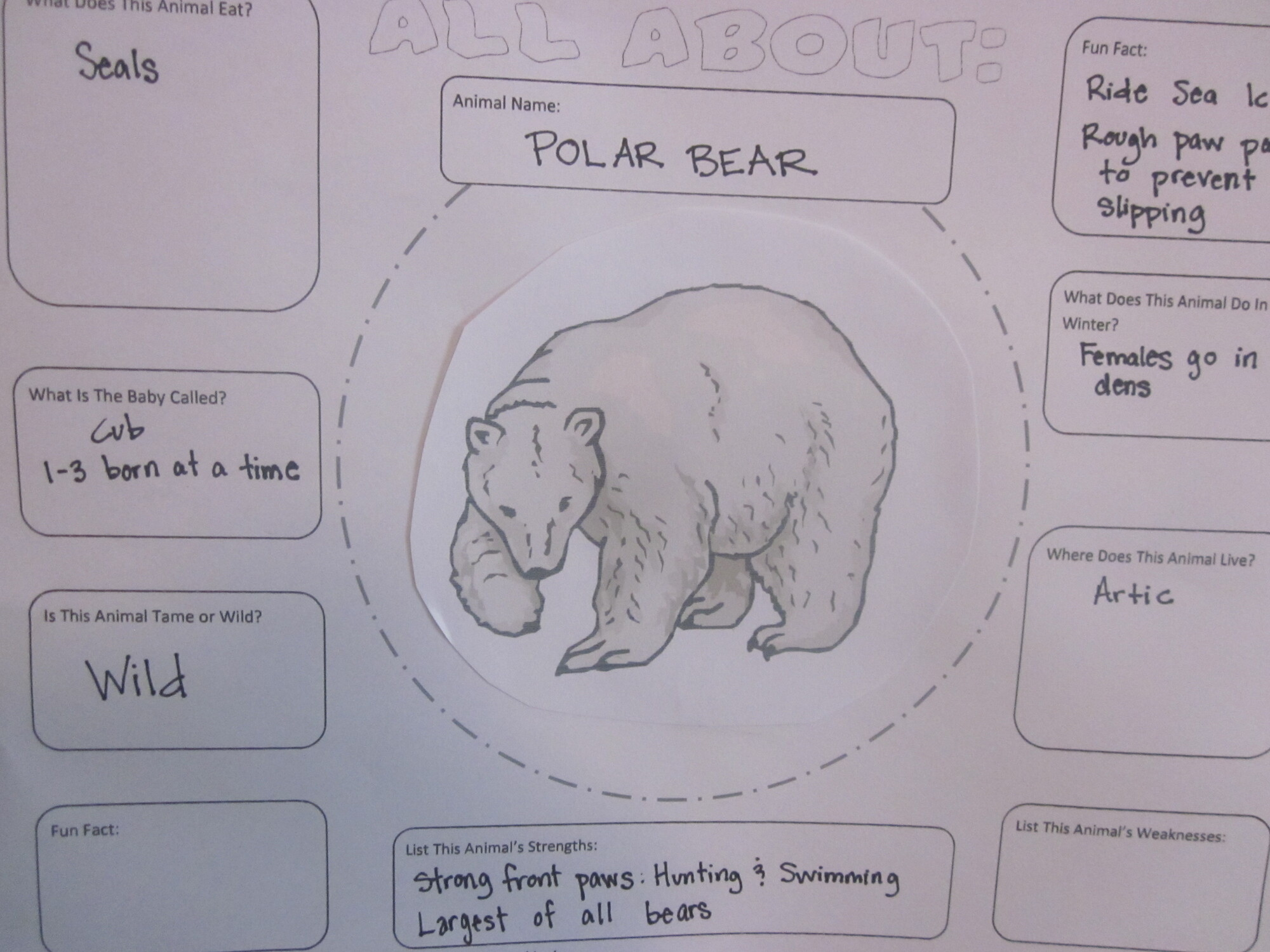 Paper Plate Craft A Is For Alpaca Preschool Educational