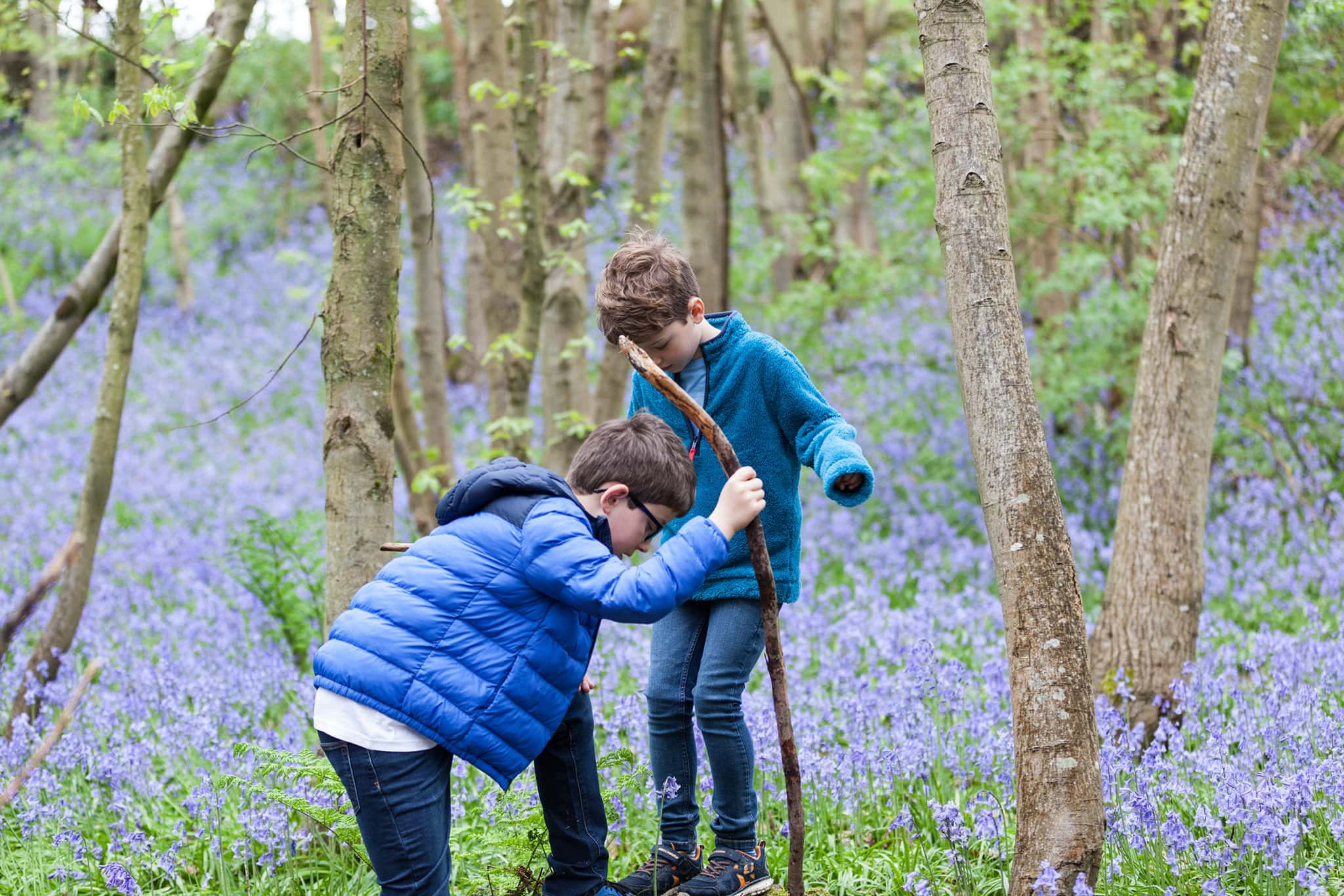 brothers with a stick playing in the bluebells at their Sevenoaks family bluebell shoot