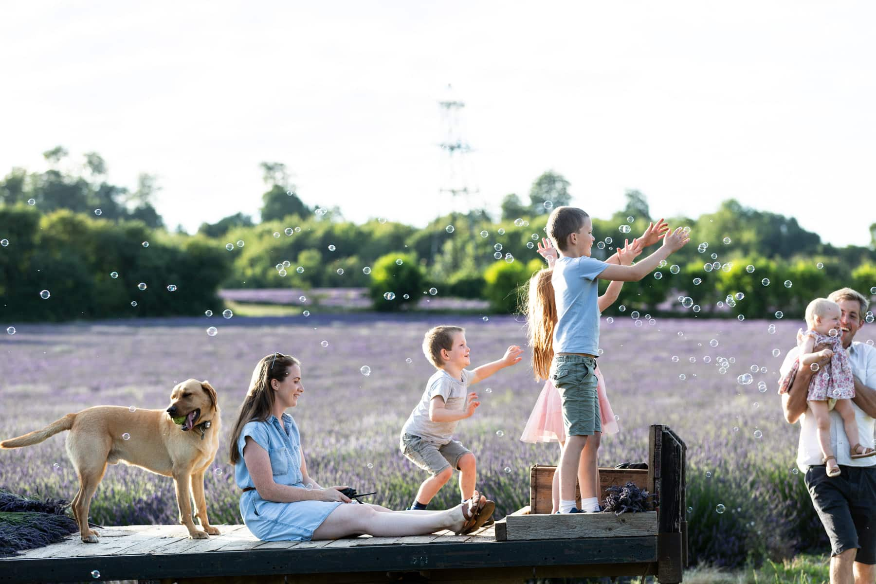 candid photograph of children, dog , tractor chasing bubbles in the lavender fields of Castle Farm in Shoreham Kent