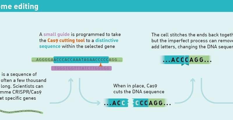 Oamenii de știință sparg codul CRISPR pentru editarea precisă a genomului uman