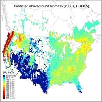 Nueva investigación calcula la capacidad de los bosques de América del Norte para capturar carbono