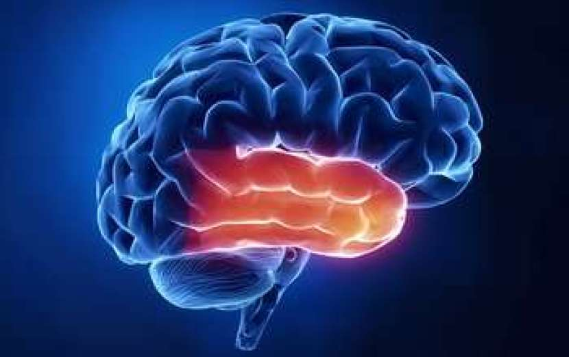 Brain scans reveal bursts of high frequency oscillations during moments of insight