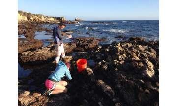 Marine vegetation can mitigate ocean acidification, study finds