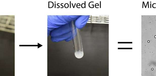 ELSI scientists discover a new chemistry that can help explain the origins of cell life