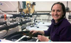During abrupt warming, lobsters in acidic water have reduced heart function, fewer infection-fighting cells