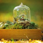 Diy Terrariums Ideas Espoma
