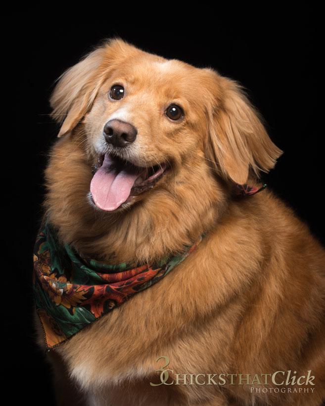 Photo of dog Lexie