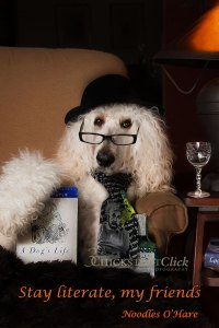 Photo of a white dog in a black hat