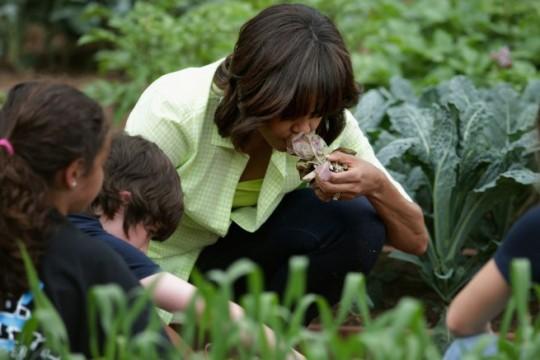 white house garden harvest-8