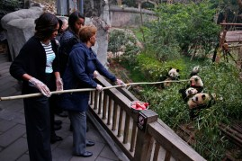 U.S. first lady Michelle Obama and her mother Marian Robinson feed apple to giant pandas as they visit Giant Panda Research Base in Chengdu