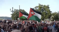 Protests for Gaza19