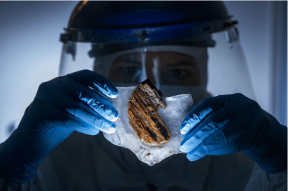 Mark Thiessen/National Geographic A researcher examines wood from the Clotilda in hopes of recovering remnants of captives' blood.