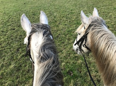 Lady Grey and Jacqueline. The first two we rode and also ones we ride again later in the week.