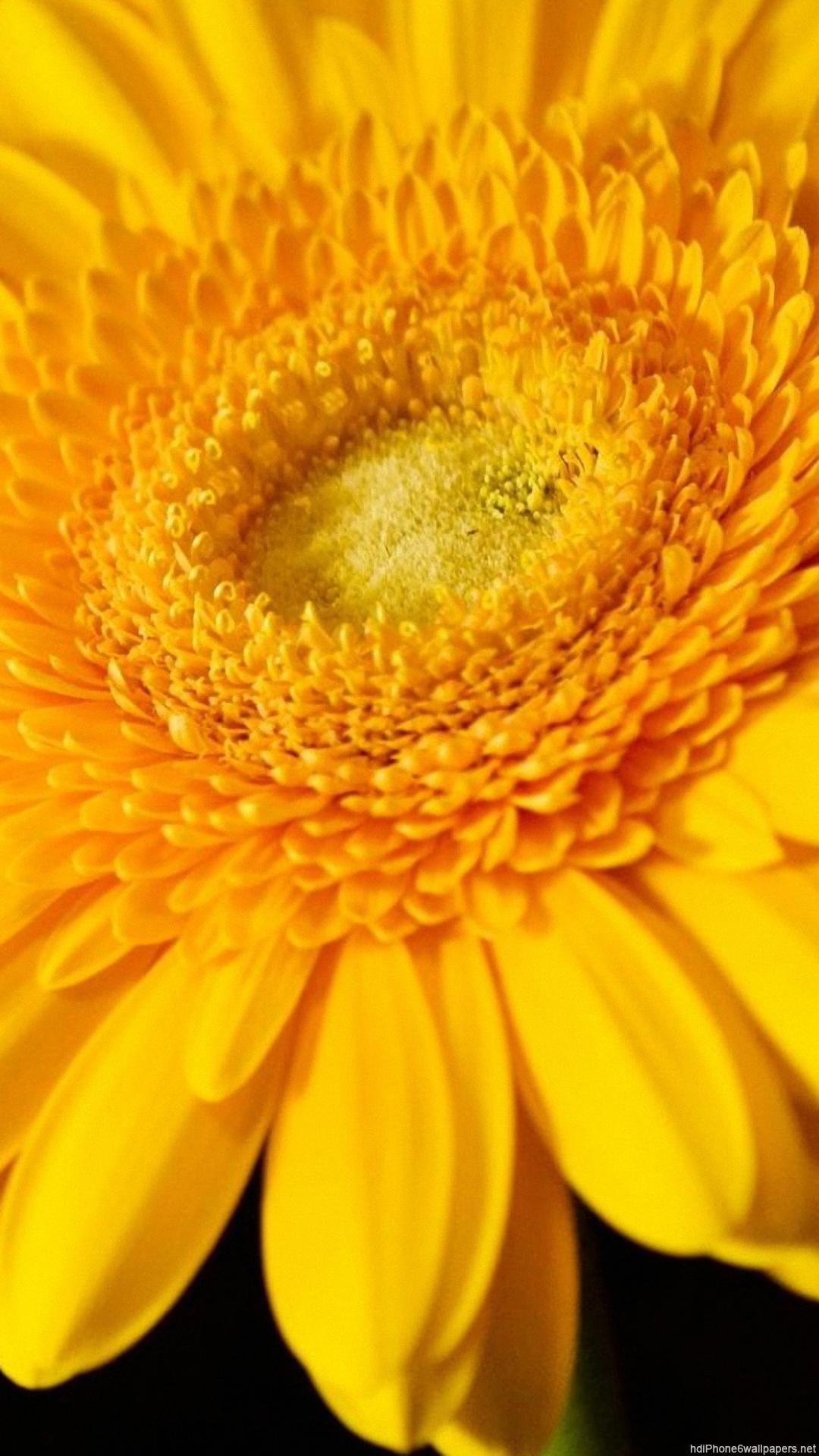 Sunflower Wallpaper Iphone 2020 3d Iphone Wallpaper