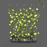 Ivy Plants 3D Model