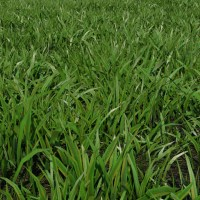 Grass Patch 3D Model - Realtime