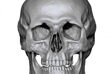 Free Male Skull 3D scan Ten21