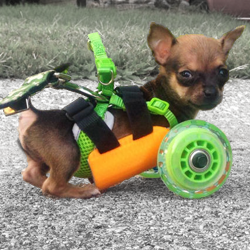disabled chihuahua turbo 3D printed cart