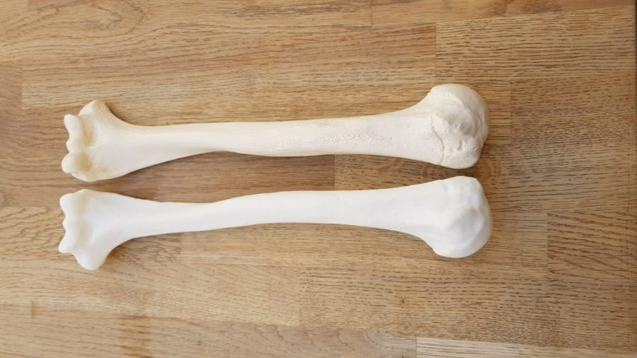 Bone printed on Copymaster 3D 300 and comparision to orginal below.