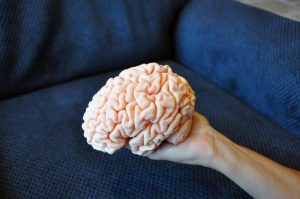 Ngay cả não người cũng được in 3D