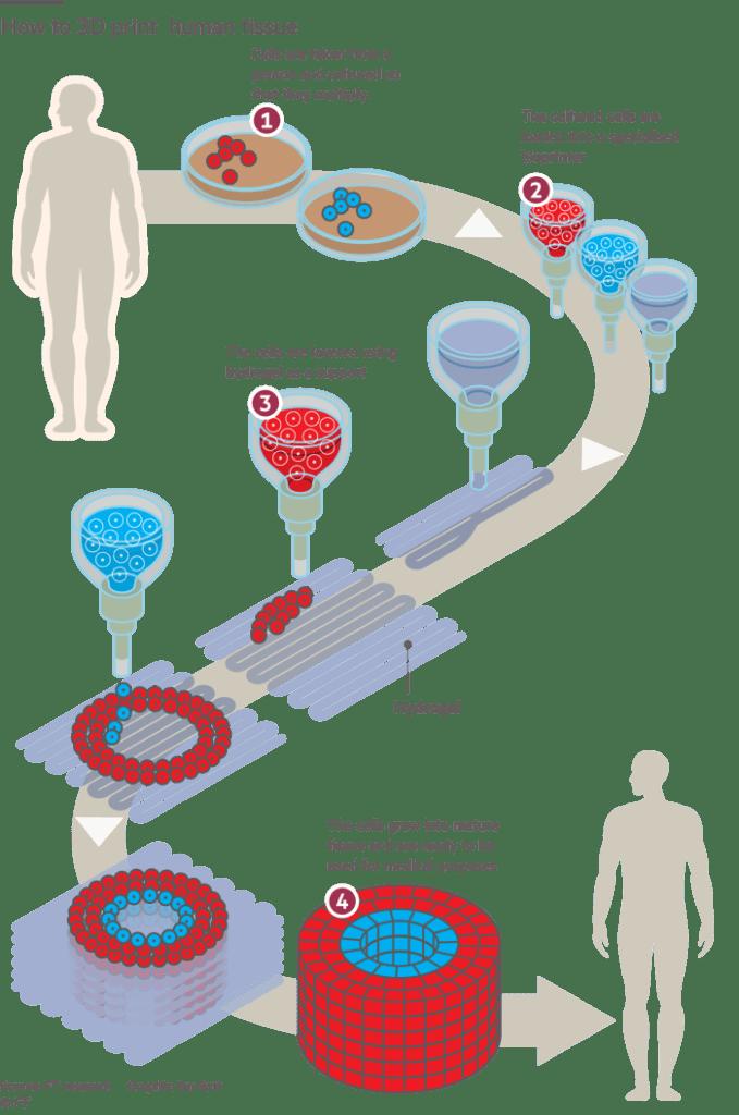 3d printed organs process