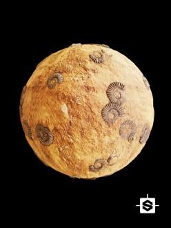 sandstone fossils ground dirt