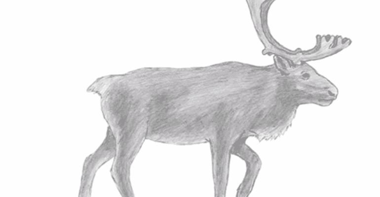 reindeer drawing