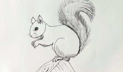 squirrel drawing
