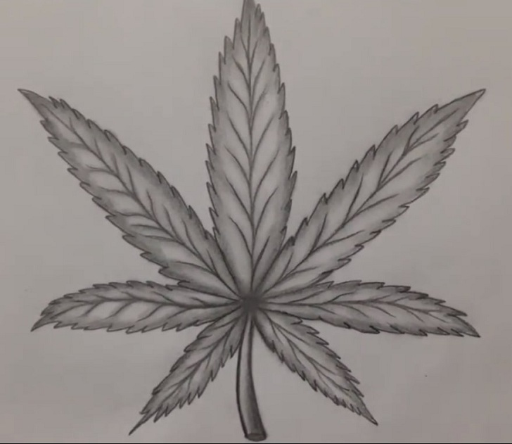 pot leaf drawing