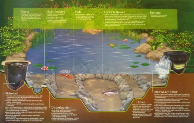 koi-pond-diagram