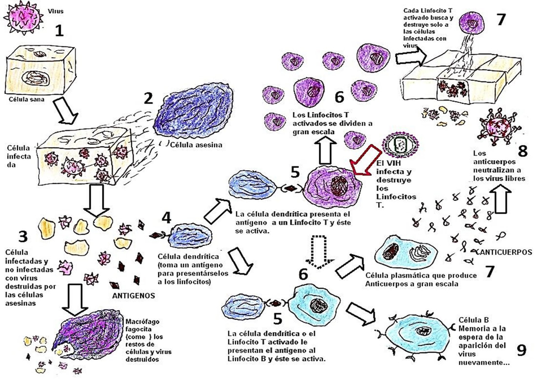 Unit 8 Health And Diseases Immune System