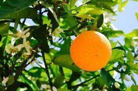 FRUIT TREES IN GARDEN HONEYMOON VILLA