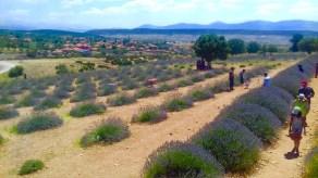 we love mahmutlar lavendar field trip1