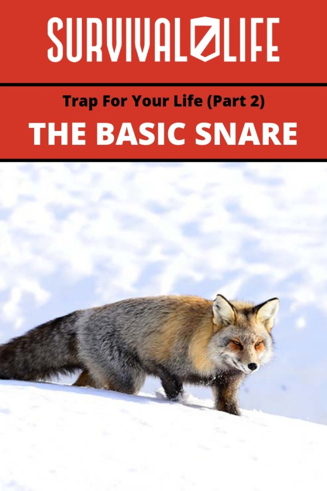 Placard   Basic Snare   The Basic Snare: Trap For Your Life (Part 2)